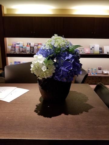 フロントに飾っている紫陽花です。